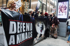 Protesters come together to rally against fur production and fur trade as well as animal rights on 59th street in Midtown Manhattan. Starting from Pulitzer fountain and marching to Central Park where horse carriages are stationed, they continued to several selected stores such as Dior and Celine and more to protest their sales on furs. As a global movement other cities in the US and UK marched on what is considered International Anti-Fur March day. Several key figures and activists were asked to speak and lead the marches. (C) Bianca Otero. NYC. October 09, 2021