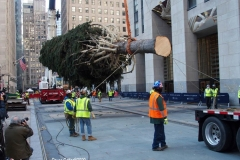 Arrival of the Rockerfeller Center Christmas Tree. Workers prepare the tree to be lifted into place as some of the family members watch the process. The whole family will be at the official tree lighting ceremony in December.
