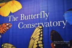 Butterfly Observatory Museum of Natural History NYC