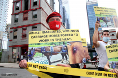New York,  Representatives from NYCLASS, PETA and other community advocates engage in a protest outside the 38th Street stable to demand immediate action from the city to save the life of an injured, emaciated horse that was being forced to pull carriages while exhibiting open wounds. Transit Workers Union 100 hold up signs to counter protest the event. Curtis Sliwa who is running for N.Y.C. Mayor next year holds sign and speaks at the podium.