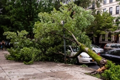 A tree fell on a car on 3rd Street  in the Park Slope neighborhood of Brookly when tropical storm Isaias hit  New York City on August 4, 2020. (Photo by Gabriele Holtermann/Sipa USA)