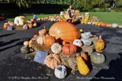NYBG Halloween Pumpkin Show During Covid 19 Pandemic