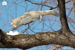 A squirrel doesn't quite know how to get thru the snow...and after falling in, he decides to climb up the tree for a fast getaway
