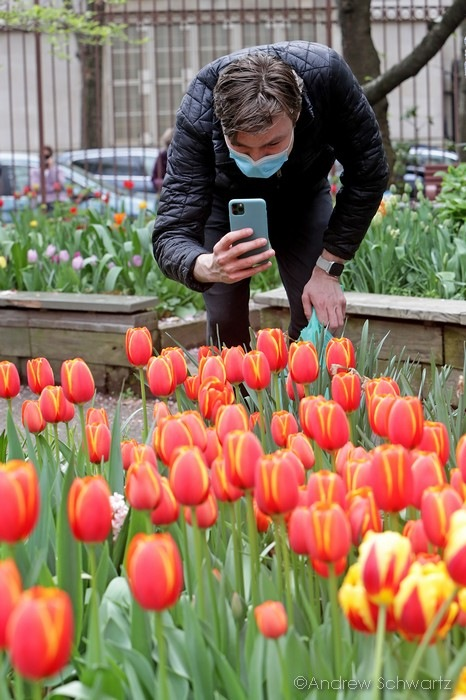 Hollands famous tulip garden is in full bloom and open