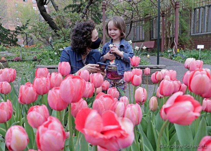 Colorful Tulips Gardens of Amsterdam.jpg Hi-Res 1440P QHD