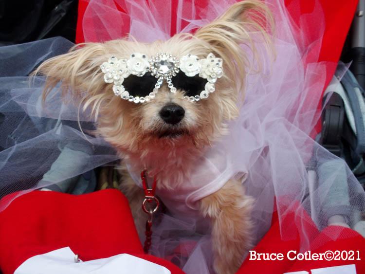 N.Y.C. Annual Halloween Dog Parade